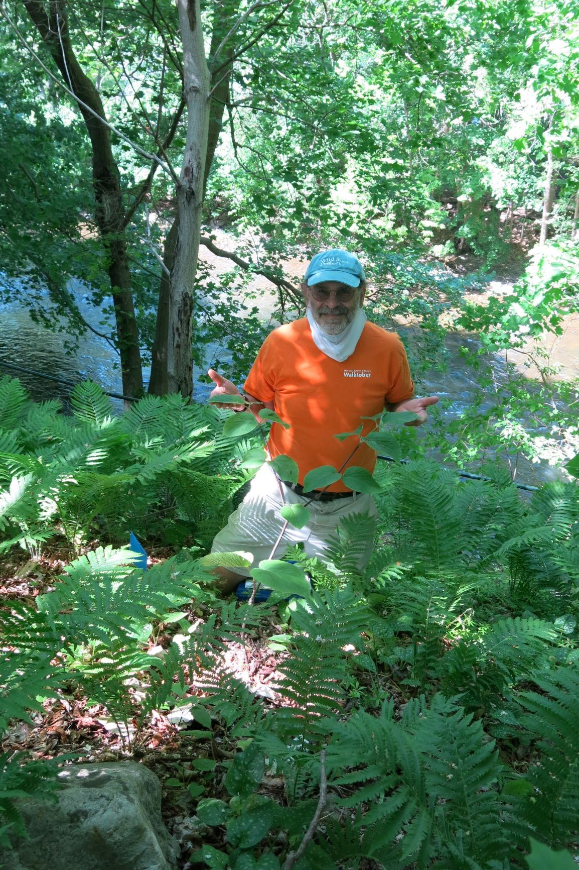 Russ Cohen leads virtual edible wild plant tours along River Walk in Great Barrington