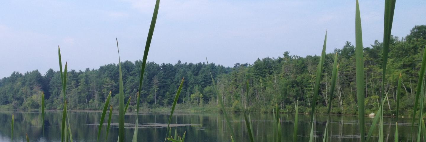 Lake Mansfield is just one Great Barrington Land Conservancy's properties